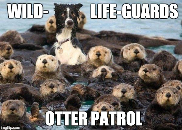Otter Dog Imgflip