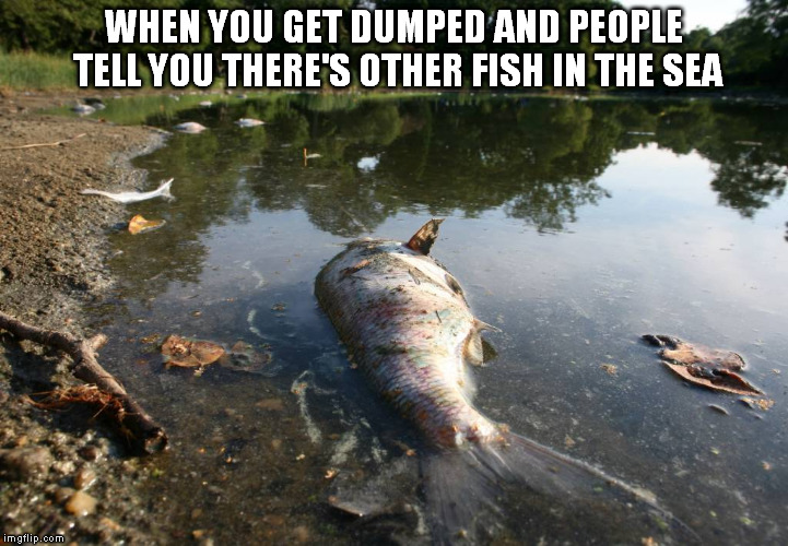 Image tagged in fish imgflip for Fish in the sea meme