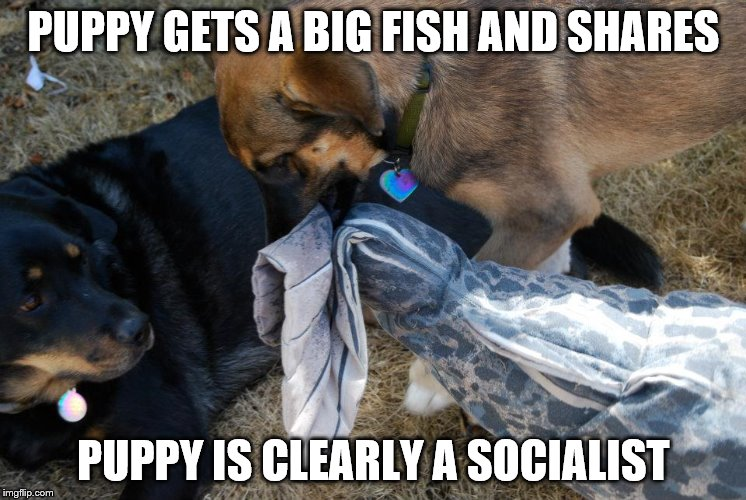 Puppy is a Socialist | PUPPY GETS A BIG FISH AND SHARES PUPPY IS CLEARLY A SOCIALIST | image tagged in socialism,puppy,dog,sharing,generosity,politics | made w/ Imgflip meme maker
