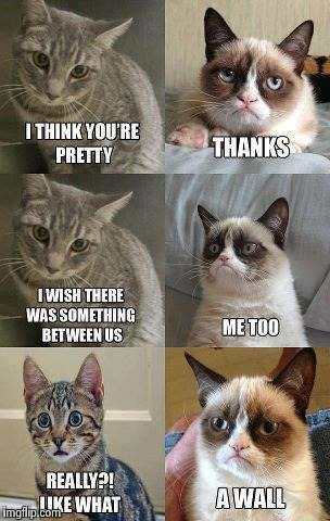 Grumpy cat | image tagged in memes,grumpy cat | made w/ Imgflip meme maker