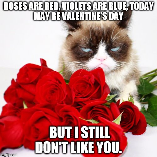 Cute Valentine Day Memes Grumpy Cat Compilation