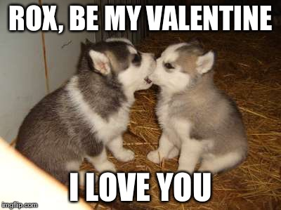 Perfekt Cute Puppies Meme | ROX, BE MY VALENTINE I LOVE YOU | Image Tagged In