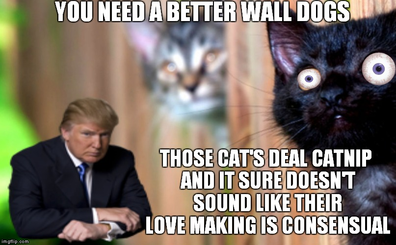 YOU NEED A BETTER WALL DOGS THOSE CAT'S DEAL CATNIP AND IT SURE DOESN'T SOUND LIKE THEIR LOVE MAKING IS CONSENSUAL | made w/ Imgflip meme maker