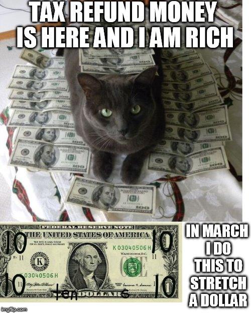 z70ry tax refund cat imgflip