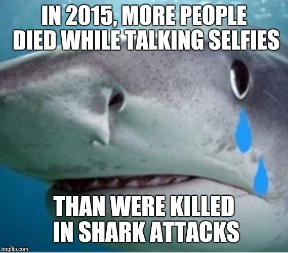 He's not feeling so tough anymore | IN 2015, MORE PEOPLE DIED WHILE TALKING SELFIES THAN WERE KILLED IN SHARK ATTACKS | image tagged in sharks,selfies | made w/ Imgflip meme maker