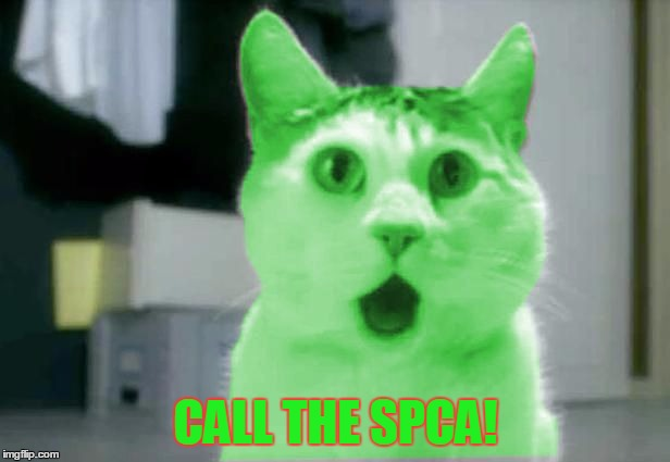 OMG RayCat | CALL THE SPCA! | image tagged in omg raycat | made w/ Imgflip meme maker