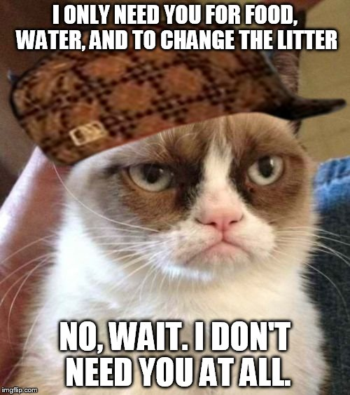 Grumpy Cat Reverse Meme | I ONLY NEED YOU FOR FOOD, WATER, AND TO CHANGE THE LITTER NO, WAIT. I DON'T NEED YOU AT ALL. | image tagged in memes,grumpy cat reverse,grumpy cat,scumbag | made w/ Imgflip meme maker