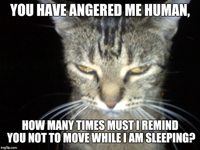 Angry Tabby Cat | YOU HAVE ANGERED ME HUMAN, HOW MANY TIMES MUST I REMIND YOU NOT TO MOVE WHILE I AM SLEEPING? | image tagged in angry tabby cat | made w/ Imgflip meme maker