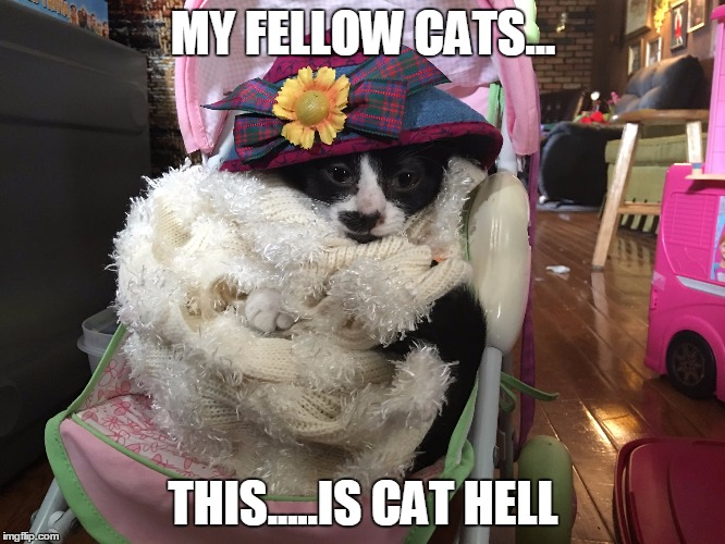 How To Make A Cat Strollers