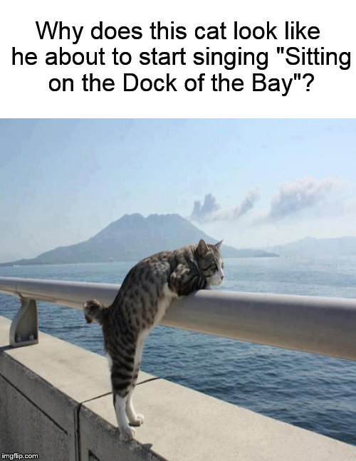 zidou pensive cat imgflip