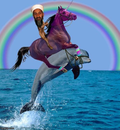 Dolphin Cat Photoshop Meme