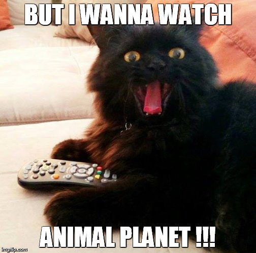 OH BOY! Cat |  BUT I WANNA WATCH; ANIMAL PLANET !!! | image tagged in oh boy cat | made w/ Imgflip meme maker