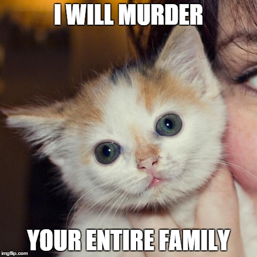 Schizophrenia Cat | I WILL MURDER YOUR ENTIRE FAMILY | image tagged in schizophrenia,cat,psycho,murder,schizo | made w/ Imgflip meme maker