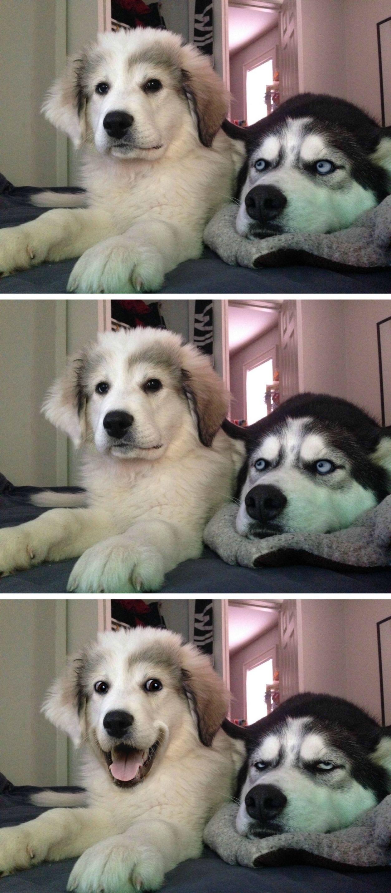 Dog Jokes Blank Template Imgflip