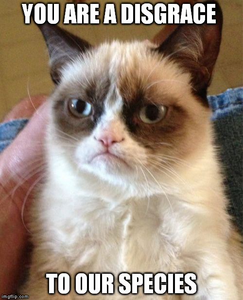 Grumpy Cat Meme | YOU ARE A DISGRACE TO OUR SPECIES | image tagged in memes,grumpy cat | made w/ Imgflip meme maker