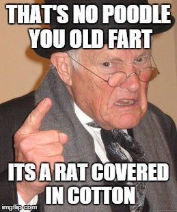 Back In My Day Meme | THAT'S NO POODLE YOU OLD FART ITS A RAT COVERED IN COTTON | image tagged in memes,back in my day | made w/ Imgflip meme maker