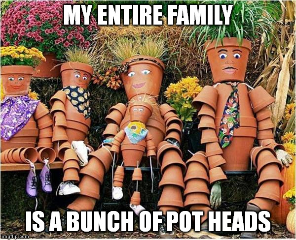 We've all gone to pot | MY ENTIRE FAMILY IS A BUNCH OF POT HEADS | image tagged in memes | made w/ Imgflip meme maker
