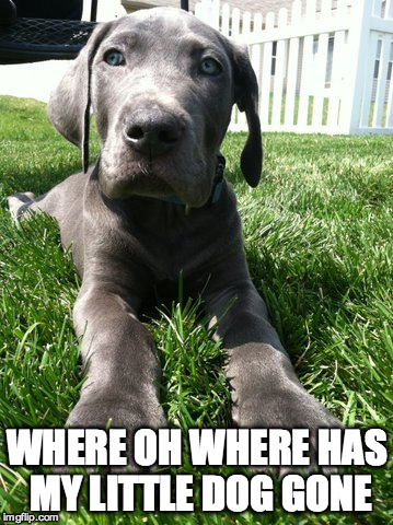 Shiloh | WHERE OH WHERE HAS MY LITTLE DOG GONE | image tagged in bad pun dog | made w/ Imgflip meme maker