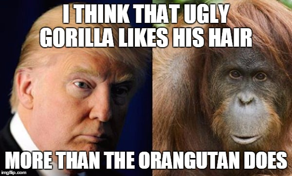 Donald Trump V.S. Orangutan | I THINK THAT UGLY GORILLA LIKES HIS HAIR MORE THAN THE ORANGUTAN DOES | image tagged in donald monkey,donald trumph hair,donald trump | made w/ Imgflip meme maker