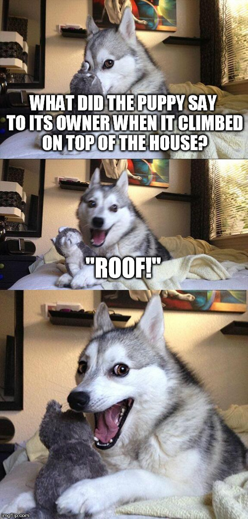 "Puppy roof | WHAT DID THE PUPPY SAY TO ITS OWNER WHEN IT CLIMBED ON TOP OF THE HOUSE? ""ROOF!"" 