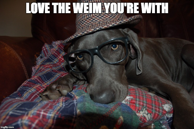 Love the weim you're with |  LOVE THE WEIM YOU'RE WITH | image tagged in weimaraner | made w/ Imgflip meme maker