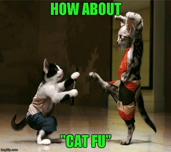 "HOW ABOUT ""CAT FU"" 