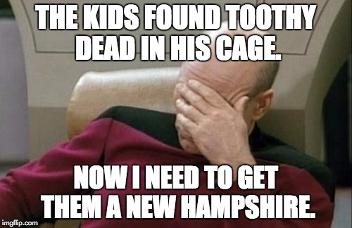 Captain Picard Facepalm Meme | THE KIDS FOUND TOOTHY DEAD IN HIS CAGE. NOW I NEED TO GET THEM A NEW HAMPSHIRE. | image tagged in memes,captain picard facepalm | made w/ Imgflip meme maker