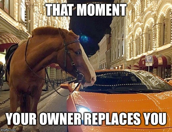No? It's just me? | THAT MOMENT YOUR OWNER REPLACES YOU | image tagged in horse,lamborghini,owner,that moment | made w/ Imgflip meme maker