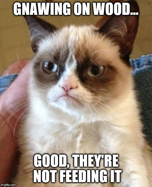 Grumpy Cat Meme | GNAWING ON WOOD... GOOD, THEY'RE NOT FEEDING IT | image tagged in memes,grumpy cat | made w/ Imgflip meme maker