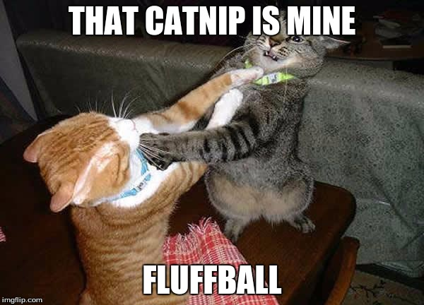 Two cats fighting for real | THAT CATNIP IS MINE FLUFFBALL | image tagged in two cats fighting for real,memes,cats | made w/ Imgflip meme maker