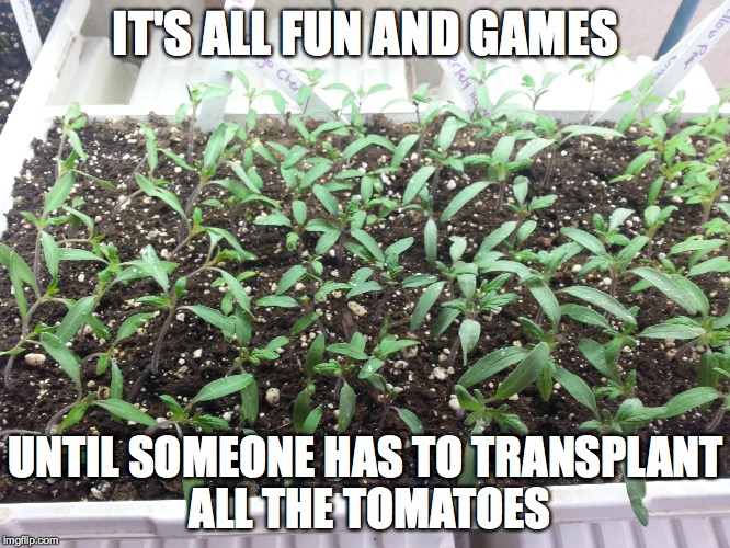 IT'S ALL FUN AND GAMES UNTIL SOMEONE HAS TO TRANSPLANT ALL THE TOMATOES | made w/ Imgflip meme maker