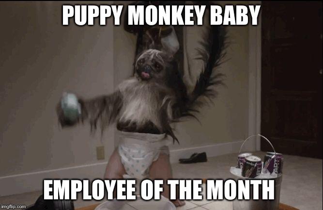 zuhkr puppy monkey baby imgflip