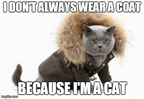 I DON'T ALWAYS WEAR A COAT BECAUSE I'M A CAT | image tagged in anti joke cat | made w/ Imgflip meme maker