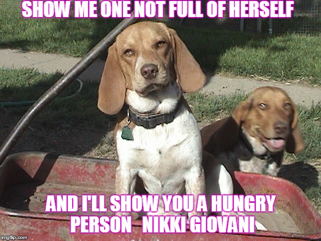 You got to strut ! |  SHOW ME ONE NOT FULL OF HERSELF; AND I'LL SHOW YOU A HUNGRY PERSON   NIKKI GIOVANI | image tagged in beagle | made w/ Imgflip meme maker