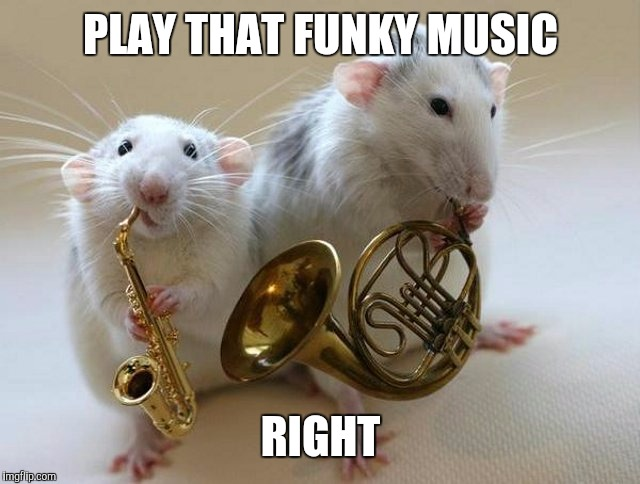 A great new band |  PLAY THAT FUNKY MUSIC; RIGHT | image tagged in fiddlesticks,mouse,memes,too funny,music | made w/ Imgflip meme maker