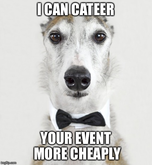GREYHOUND | I CAN CATEER YOUR EVENT MORE CHEAPLY | image tagged in greyhound | made w/ Imgflip meme maker
