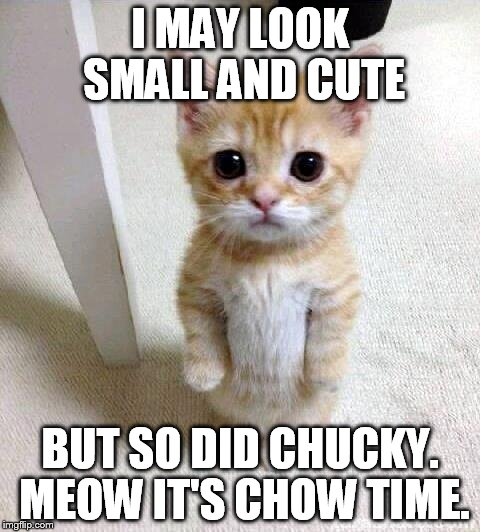 Cute Cat | I MAY LOOK SMALL AND CUTE BUT SO DID CHUCKY. MEOW IT'S CHOW TIME. | image tagged in memes,cute cat | made w/ Imgflip meme maker