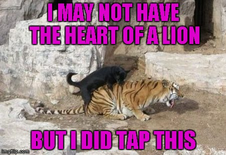 I MAY NOT HAVE THE HEART OF A LION BUT I DID TAP THIS | made w/ Imgflip meme maker
