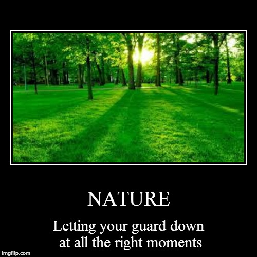 There could be a bulldozer right behind you... | NATURE | Letting your guard down at all the right moments | image tagged in funny,demotivationals,nature,trees,tree,danger | made w/ Imgflip demotivational maker
