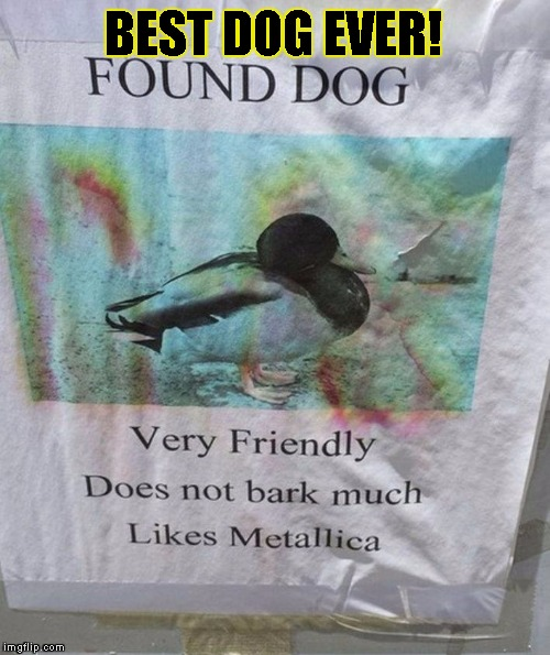 Heavy Metal Duck Dog | BEST DOG EVER! | image tagged in funny,signs/billboards,memes,heavy metal,dog,duck | made w/ Imgflip meme maker