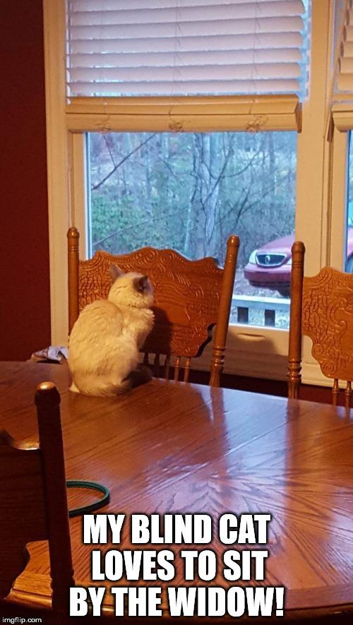 zxx3d blind cat love the window imgflip