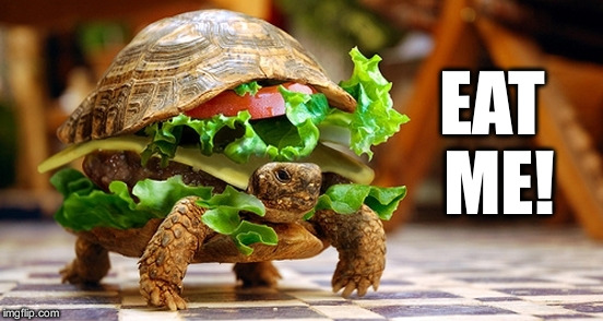 Angry Turtle Burger | EAT ME! | image tagged in turtle burger,memes | made w/ Imgflip meme maker