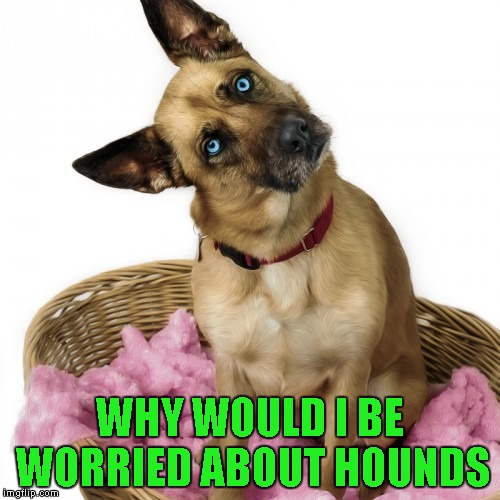 WHY WOULD I BE WORRIED ABOUT HOUNDS | made w/ Imgflip meme maker